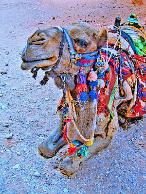 Petra Digital Art - Mysterious Peter. Resting Camel. by Andy Za