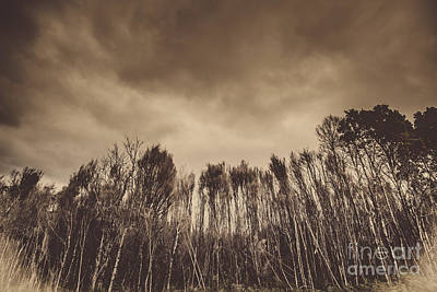 Charred Wall Art - Photograph - Mysterious Scary Forest by Jorgo Photography - Wall Art Gallery
