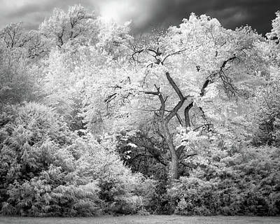 Photograph - Mysterious Tree by James Barber