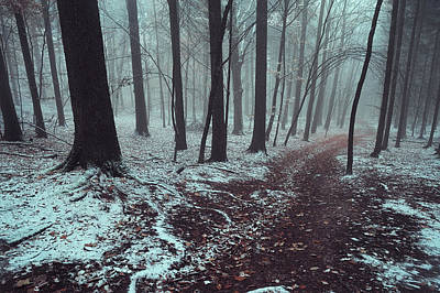 Photograph - Mysterious Winter Woods 1 by Jenny Rainbow
