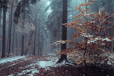 Photograph - Mysterious Winter Woods 2 by Jenny Rainbow