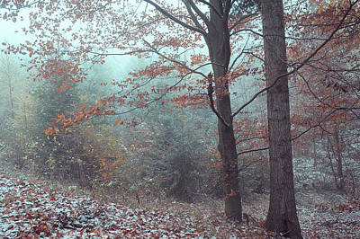 Photograph - Mysterious Winter Woods 4 by Jenny Rainbow