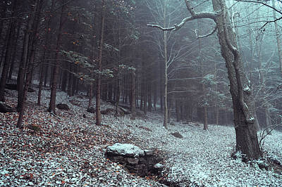 Photograph - Mysterious Winter Woods 5 by Jenny Rainbow