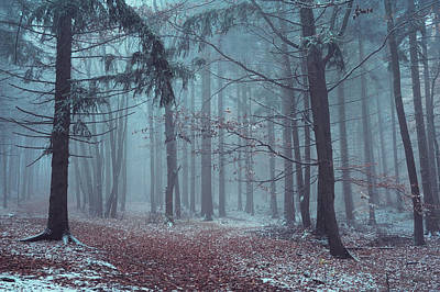 Photograph - Mysterious Winter Woods by Jenny Rainbow