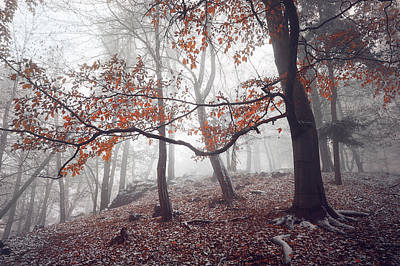Photograph - Mysterious Woods  by Jenny Rainbow