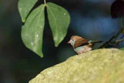 Photograph - Mystery Bird by Brian Hale