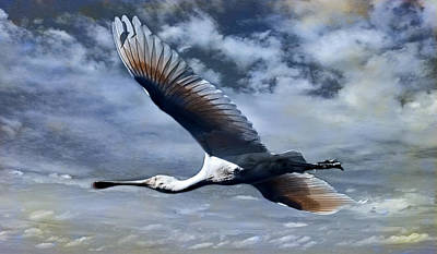Spoonbill Digital Art - Mystery Flight by Heather Thorning