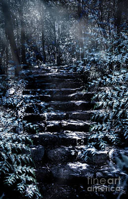 Mystery Forest Stairs Landscape Art Print