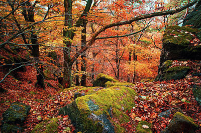 Photograph - Mystery Of Autumn by Jenny Rainbow