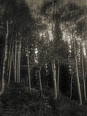 Photograph - Mystery Of The Forest by David King