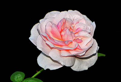 Photograph - Mystic Beauty Rose 003 by George Bostian