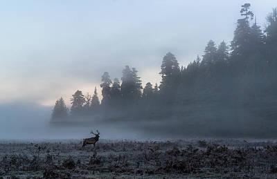 Photograph - Mystic Elk by Scott Warner