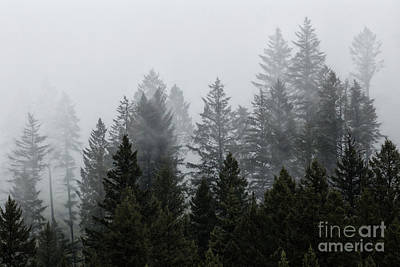 Photograph - Mystic Forest by Brad Allen Fine Art