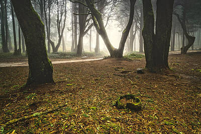 Photograph - Mystic Forest I by Marco Oliveira