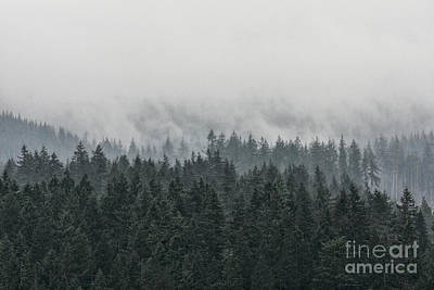 Photograph - Mystic Forest IIi by Brad Allen Fine Art