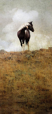 Photograph - Mystic Pony by Theresa Tahara