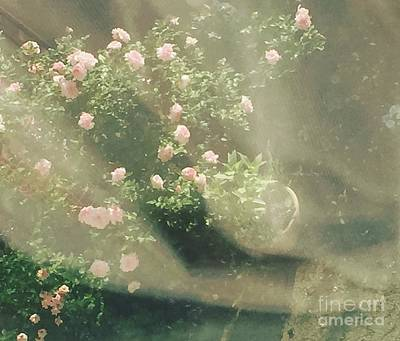 Photograph - Mystic  Roses by Trilby Cole