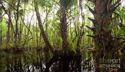 Mystic Swamp Art Print