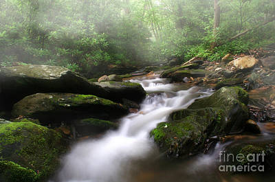 Creekbed Photograph - Mystical by Darren Fisher
