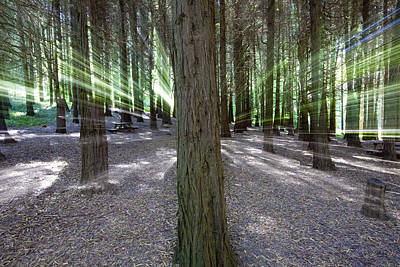 Mystical Forest Photograph - Mystical Forest by Andre Goncalves
