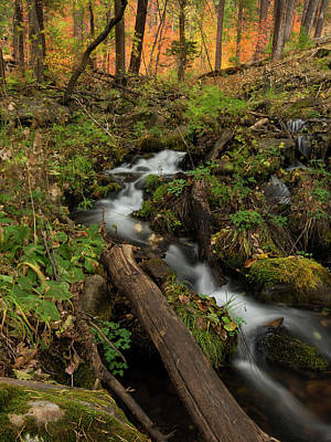 Photograph - Magical Forest Creek by Sue Cullumber