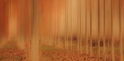 Photograph - Mystical Forest by Don Schwartz