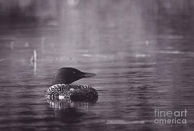 Photograph - Mystical Loon by Cheryl Baxter