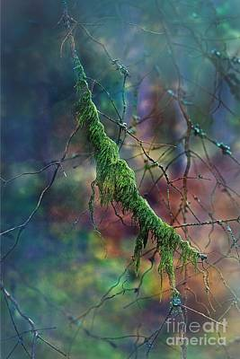Photograph - Mystical Moss - Series 1/2 by Ezo Oneir