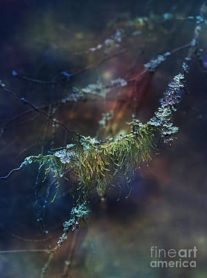 Photograph - Mystical Moss - Series 2/2 by Agnieszka Mlicka