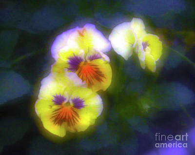 Photograph - Mystical Pansies by Judi Bagwell