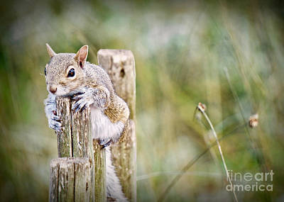 Photograph - Mystical Squirrel by Judy Kay