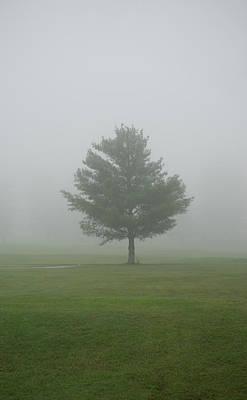 Photograph - Mystical Tree Of The Faerie by Douglas Barnett