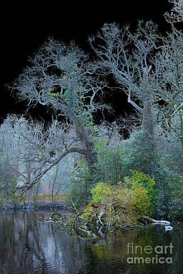 Photograph - Mystical Wintertree by Casper Cammeraat