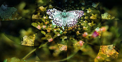 Photograph - Mythical Butterfly  by Rose  Hill