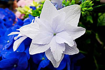 Photograph - Nagasaki Floral Study 1 by Robert Meyers-Lussier