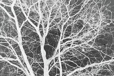 Art Print featuring the photograph Naked Branch by Dodie Ulery