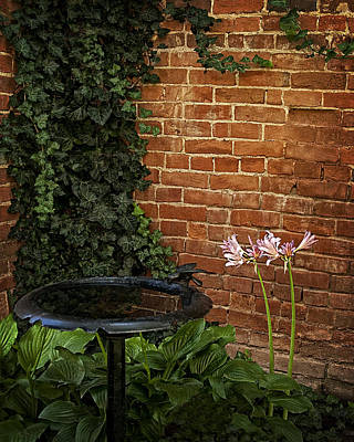 Naked Ladies In The Garden Corner Art Print by Mitch Spence