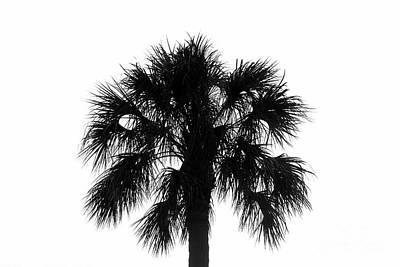 Naked Palm Art Print by David Lee Thompson
