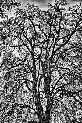 Photograph - Naked Tree On Capitol Hill by Val Black Russian Tourchin