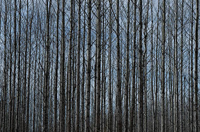 Photograph - Naked Woods by Ed Waldrop