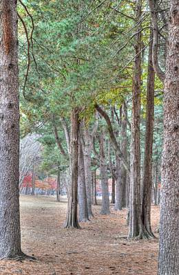 Photograph - Nami Island Korea by Bill Hamilton