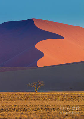 Tall Trees Photograph - Namib Dune by Inge Johnsson