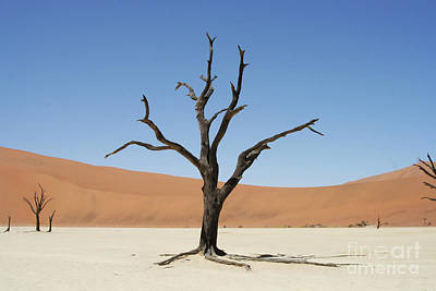 Desolate Photograph - Namibia Desert by Nichola Denny