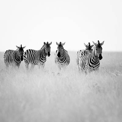 Zebras Photograph - Namibia Zebras II by Nina Papiorek