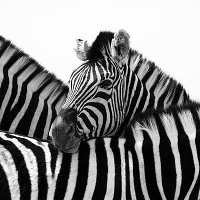 Zebras Photograph - Namibia Zebras IIi by Nina Papiorek