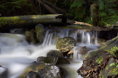 Photograph - Nancy Creek 5 by Loni Collins