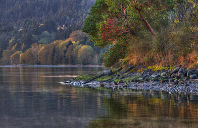 Photograph - Nanoose Morning by Randy Hall