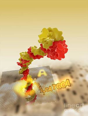 Photograph - Nanopore Sequencing, Artwork by Ramon Andrade 3Dciencia