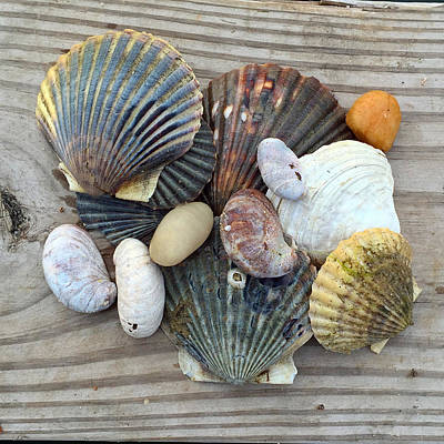 Andrea Grist Wall Art - Photograph - Nantucket Beach Combing by Andrea K Grist