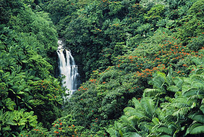 Nanue Falls Hawaii Art Print by Greg Vaughn